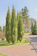 Фрагмент пейзажного парка