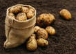 Newly harvested potatoes - 81590388