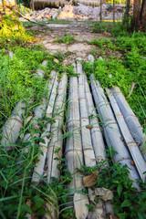 Bridge bamboo with green plants