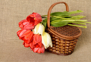 bouquet of red tulips and the wicker basket on burlap background