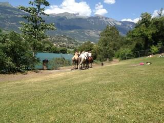 cammelli in svizzera