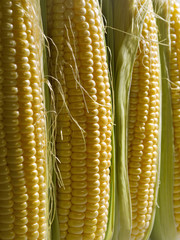 Close-up of Corn cob