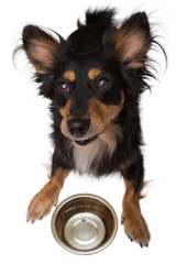 Smiling dog defends his bowl