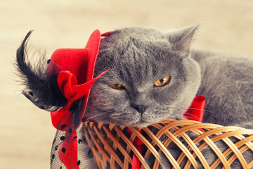 Fashion portrait of cute cat wearing female hat