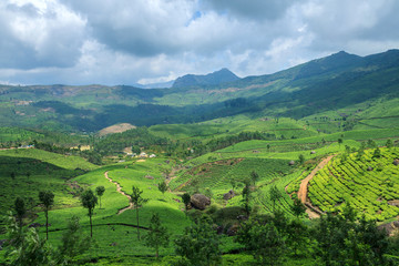Tea Plantations in Munnar,Kerala,India
