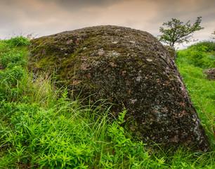 stones and  plants