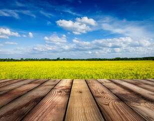 Yellow canola field with sky, wooden planks floor