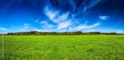 Summer meadow panorama