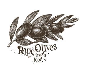 olives vector logo design template. fresh fruit, food or