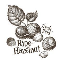 hazelnut vector logo design template. fresh walnut, food or nut