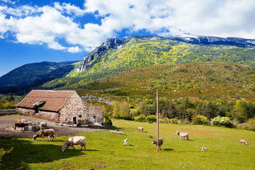 Paisaje de montañas, granja y vacas en campos verdes