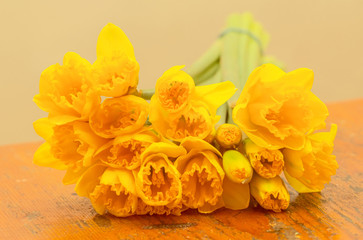 Bouquet of fresh yellow daffodils