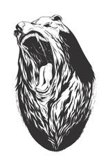 Vector illustration with bear head