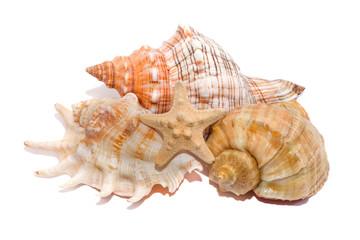 Морские раковины на белом