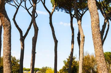 Fila di alberi a primavera