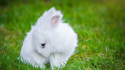 Video of white rabbit outdoors