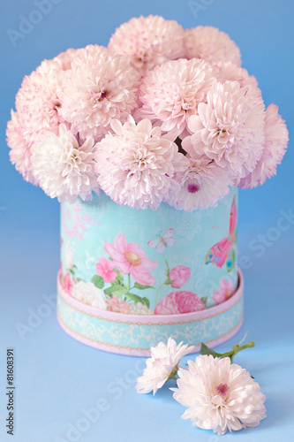 Foto op Aluminium Dahlia pink chrysanthemum flowers in a beautiful box. blue background.
