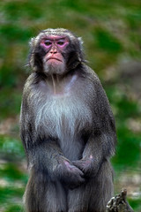 Portrait of monkey 6