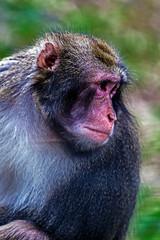 Portrait of monkey 7
