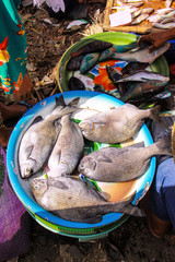fresh fish at the market,Lombok, Indonesia