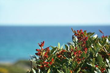 Bacche rosse sul mare