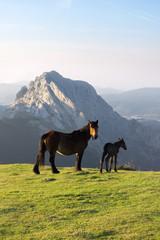horses in Urkiola