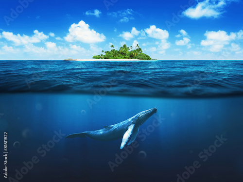 Beautiful island with palm trees. Whale underwater - 81611922