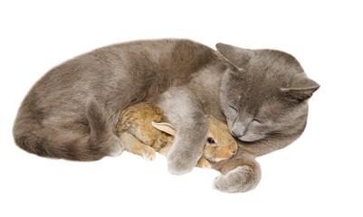 Gatto e coniglio dormono abbracciati
