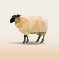 Low poly design. Sheep illustration.