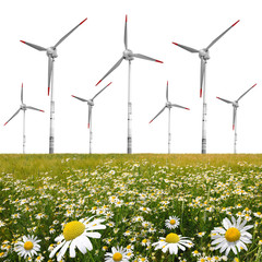 Field of marguerites with wind turbines on white background