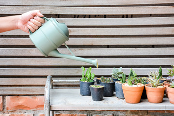 watering can ans group of cactus