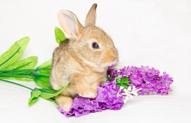 Piccolo coniglio seduto tra i fiori viola