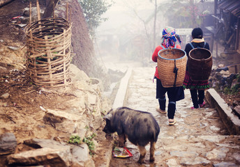 Hmong women are on a way from their village to Sapa, Vietnam.