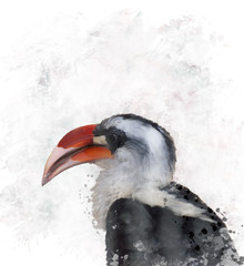 Hornbill Watercolor