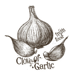 garlic vector logo design template. fresh vegetables, food or