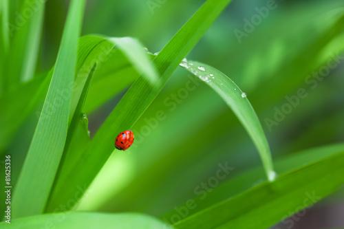Poster Water planten Ladybug on Leaf