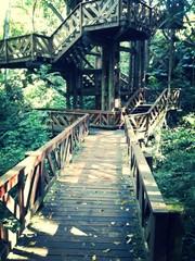 Ponte de Madeira Bosque do Alemão - Curitiba - Paraná