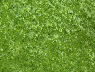 Green vegetable smoothie close up