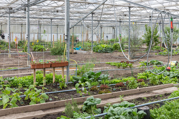Greenhouse with several small vegetable gardens