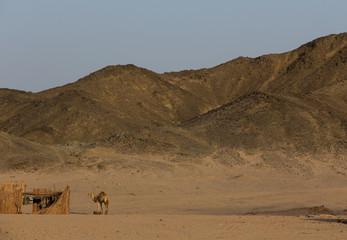 Arabian desert (Аравийская пустыня) 2