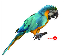 colorful macaw parrot sitting on a wooden stick
