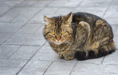 Portrait of city cat sitting on a pavement