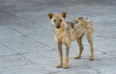 Cute street dog recovered from ringworm