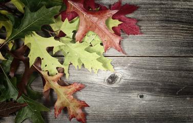 Fading autumn Leaves on Age Wood