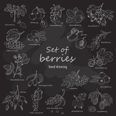Collection of garden and wild berries in sketch style