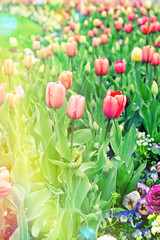 Spring flowers. Colorful blossoms. Vintage style toned picture