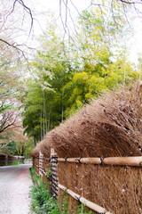 Japanese spring scenery / bamboo grove