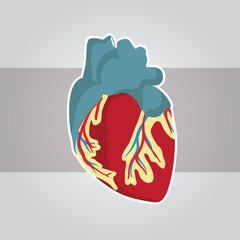 Medical Heart Illustration