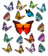 Set of different colorful butterflies. Vector. - 81642754