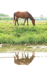 horse standing on the grass